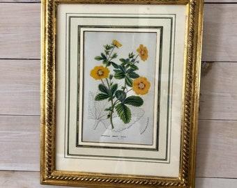 "Vintage ""Potentilla"" Botanical"