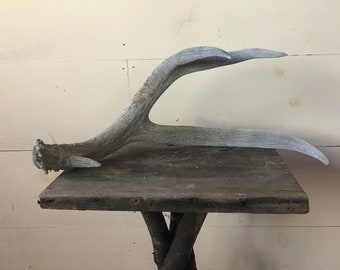 Weathered Antler I
