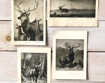 Deer and Elk Prints - set of 4