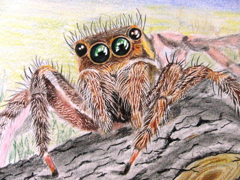 JUMPING SPIDER PAINTING Unique Colored Pencil Art Original Drawing animal painting 7 by 10 jumping spider portrait