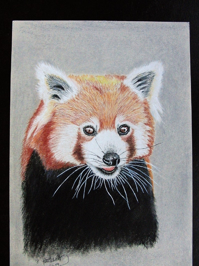 Unique original drawing red panda portrait chalk pastel etsy