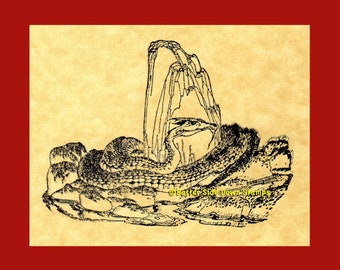 Dragon's Lair  Rubber Stamp Great Wyrm