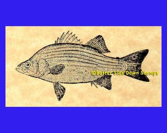 White Bass Game Fish Rubber Stamp
