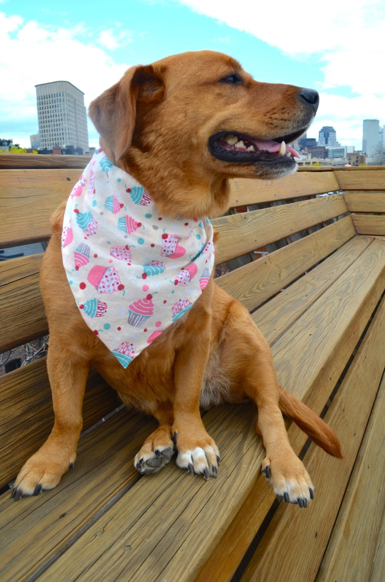 Field of Dreams Slip-On Collar Dog Bandana large