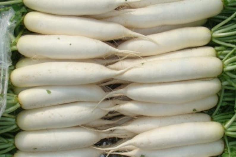 200 Samen NT der Rettich Lang Weiß Eiszapfen//Gemüsegarten Gemüse Pflanzen