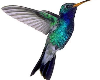 """Hummingbird Temporary Tattoo 2.5x2"""" 3 copies - FAST SHIPPING"""