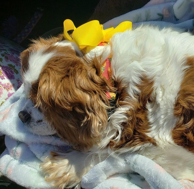 THE HAVEN BOW Bright Yellow Grosgrain Dog Hair Bows Hairbows Big Oversized
