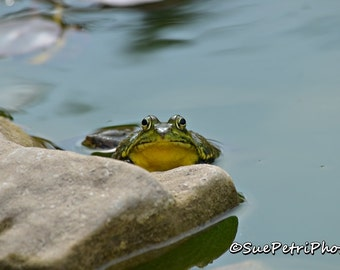 Frog Photos, Green frog prints, frog art, photos of frogs, nature photography, animal photography, amphibian, frog, frogs
