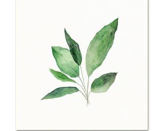 Watercolor Botanical Art Print. Peace Lily Leaves. House Plant Art. Living Room Decor. Nature Art. Simple Botanical Painting. Nursery Art.