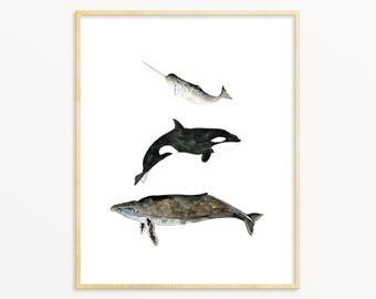 Watercolor Whale Print. Black & White Whale Print. Whale Poster. Narwhal / Humpback Whale Art. Coastal Nursery Wall Art. Nautical Art Print.