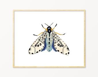 Pale Blue Moth Art Print. Nature Gallery Wall Art. Kids Room Decor. Moth Art. Moth Painting. Blue / White /Beige Moth Artwork. Bug Art Print