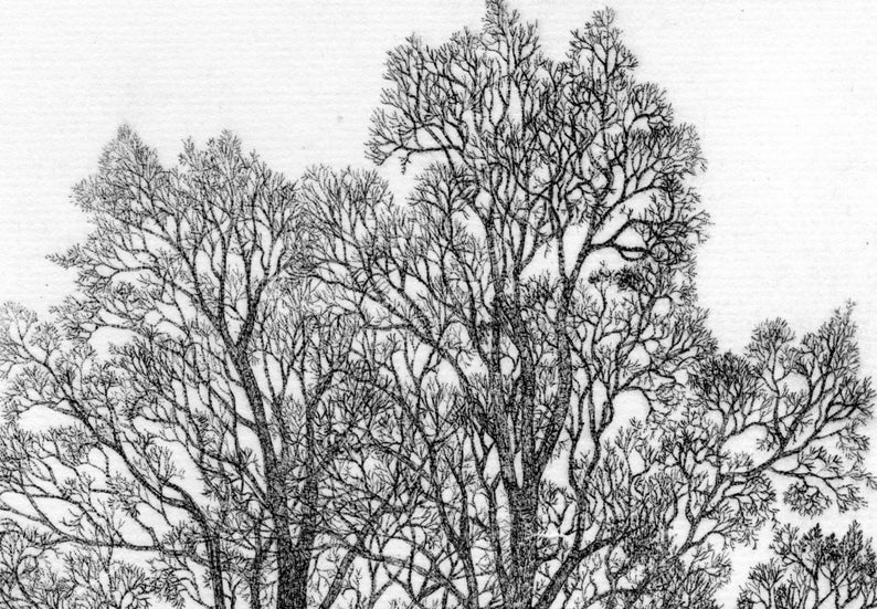 Two Elms etching limited edition