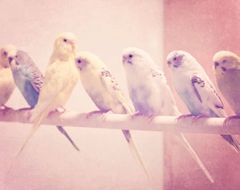 Bird Photography - Whimsical Photography - Parakeets Photograph - Nursery - Birds - Fine Art Photography Print - Pink Yellow Blue Home Decor
