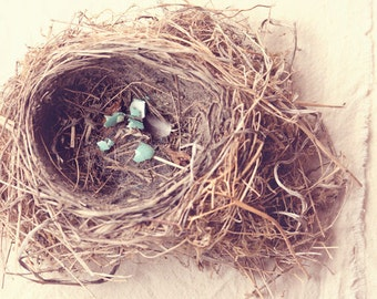 Nature Photography - Whimsical Photography - Nest Photograph - Nursery - Nest - Fine Art Photography Print - Neutral Brown Blue Home Decor