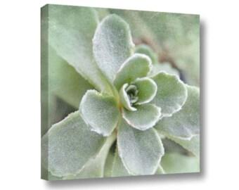 Succulant Photo, Gallery Wrapped Canvas, Mint Green Sedum Canvas, Pastel Botanical Sedum Square Canvas, Nature Photo Sedum Art, Kitchen Art