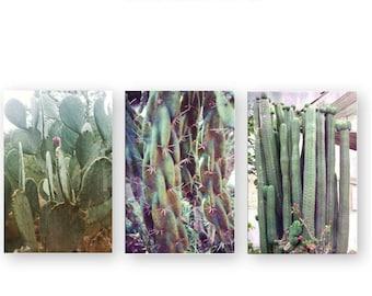 Cactus Photo Set, Cacti Photography, Nature Greens Succulents Photos, Dessert Nature Print set, Sedum Art, Photo Art Print Set