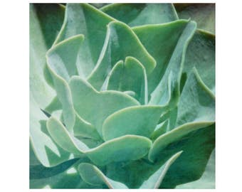 Green Sedum Photo, Mint Green Succulent Photo,  Sedum Print,  Nature Photo Sedum Art, Dining Room Art, Kitchen Art, Organic Plant Print