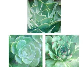 Green Sedum Photo Set, Succulents Photos, Pastel Green Botanical Sedum Print,  Mint Green Nature Photo Sedum Art, Organic Plant Print set