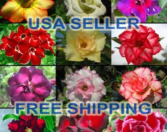 images of desert rose plants