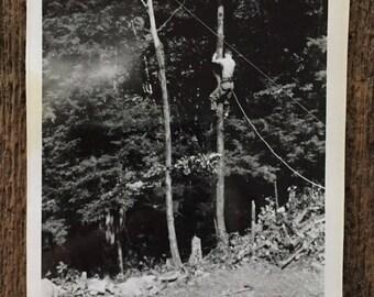 Klettergurt Baum : Baum klettergurt etsy