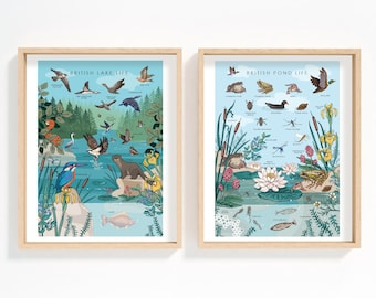 Set of 2 Lake and Pond Life Wall Art Prints, British Nature Guides Collection of Wetlands Wildlife