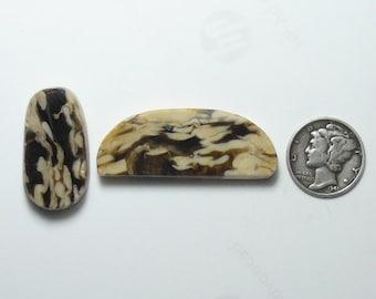 2 Ancient petrified wood, Peanut Wood, preformed rough slabs,15x40x5mm, 9x27x5.5mm, scarce, natural (rs11614)