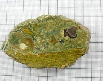 Rain Forest Jasper (Rhyolite) rough chunk, 20 x 30 x 4 mm, natural multi colored stone, 1 side flat. (s7212)