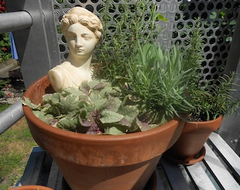 Celluloid Head for the Garden