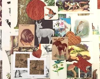 """40+ """"Wild Things"""" Ephemera Pack"""