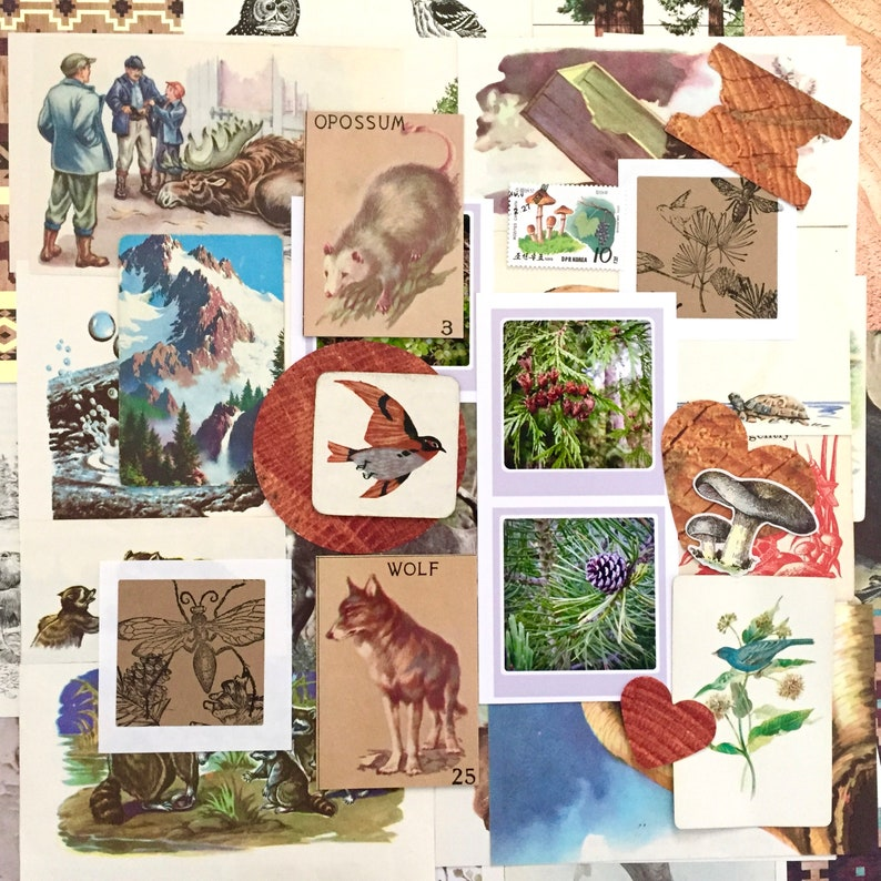 40 Wild Things Ephemera Pack image 0