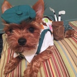 Dog Costume, Dog Golfer Costume, Halloween Dog Costume, dog clothes, pet clothes, dog golf
