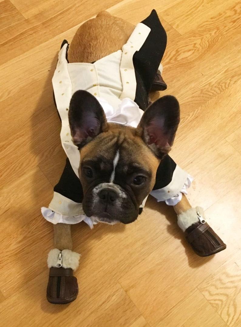 Dog costume Dog Alexander Hamilton costume Dog halloween image 1
