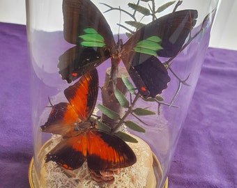 Butterfly Glass Dome Gold