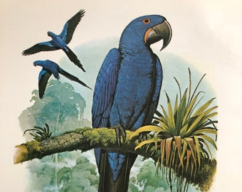 Vintage Original Tropical Bird Illustration Bookplate Lorikeet Parrot Framable Art