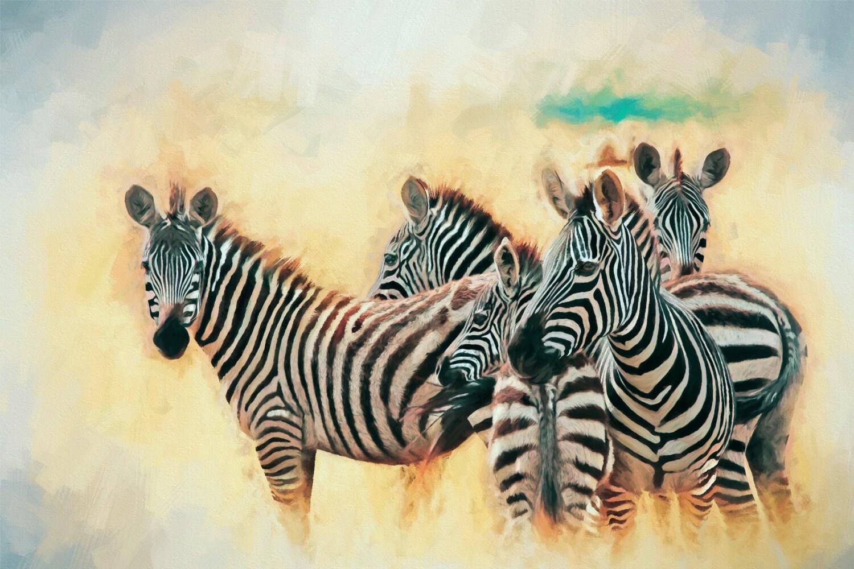 Zebras Got Your Back Black & White Africa   Etsy