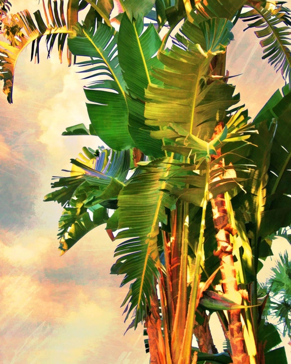 Bird Of Paradise Palm Trees Palm Canvas Ready To Hang Etsy