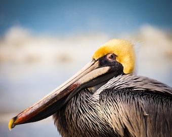 SALE - Brown Pelican Photograph, Bird Portrait, Beach Photo, Nature Photography, Florida Wildlife - fine art photograph