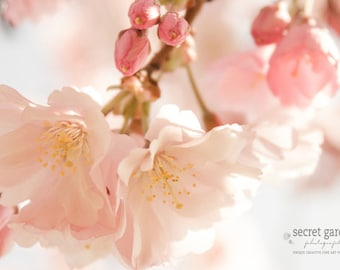 home decor, wall art, fine art photography, pretty photograph, nature photo, pink, spring, blossom, bokeh, flower print, gifts for her