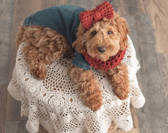 Knitted Dog Cowl Handmade Cowl with Buttons Custom Made Seven Color Choices Warm Pet Accessories