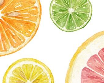 Citrus - Grapefruit, Orange, Lemon, Lime / Watercolor Illustration / Food Illustration / Art Print / Giclée Print / Wall Art / Home Decor