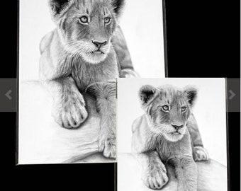 Lion Cub Drawing - PRINTS