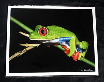 Red-Eyed Tree Frog Drawing - PRINT