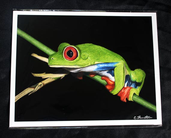 Red-Eyed Tree Frog Drawing PRINT