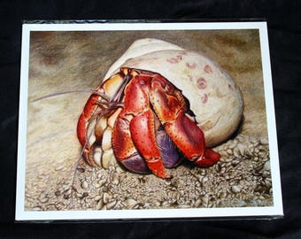 Hermit Crab Colored Pencil Drawing - PRINT