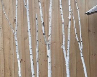 Birch Forked Poles