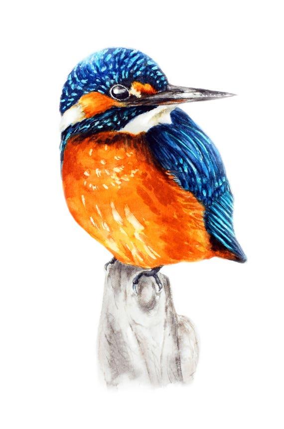 Kingfisher art print