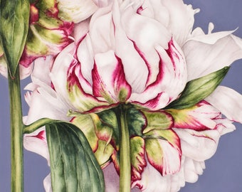 Botanical Art Print, Art Prints, Home Decor, Peony Fine Art Print, Mothers Day Gift, Flower Watercolour, Wall Decor, Botanical Illustration