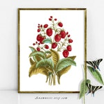 STRAWBERRIES - High Res Digital Image - printable antique fruit illustration for image transfer to totes, pillows, prints, tags - home decor