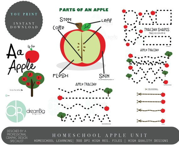 Apple Unit Apple Study Worksheet Montessori Charlotte | Etsy