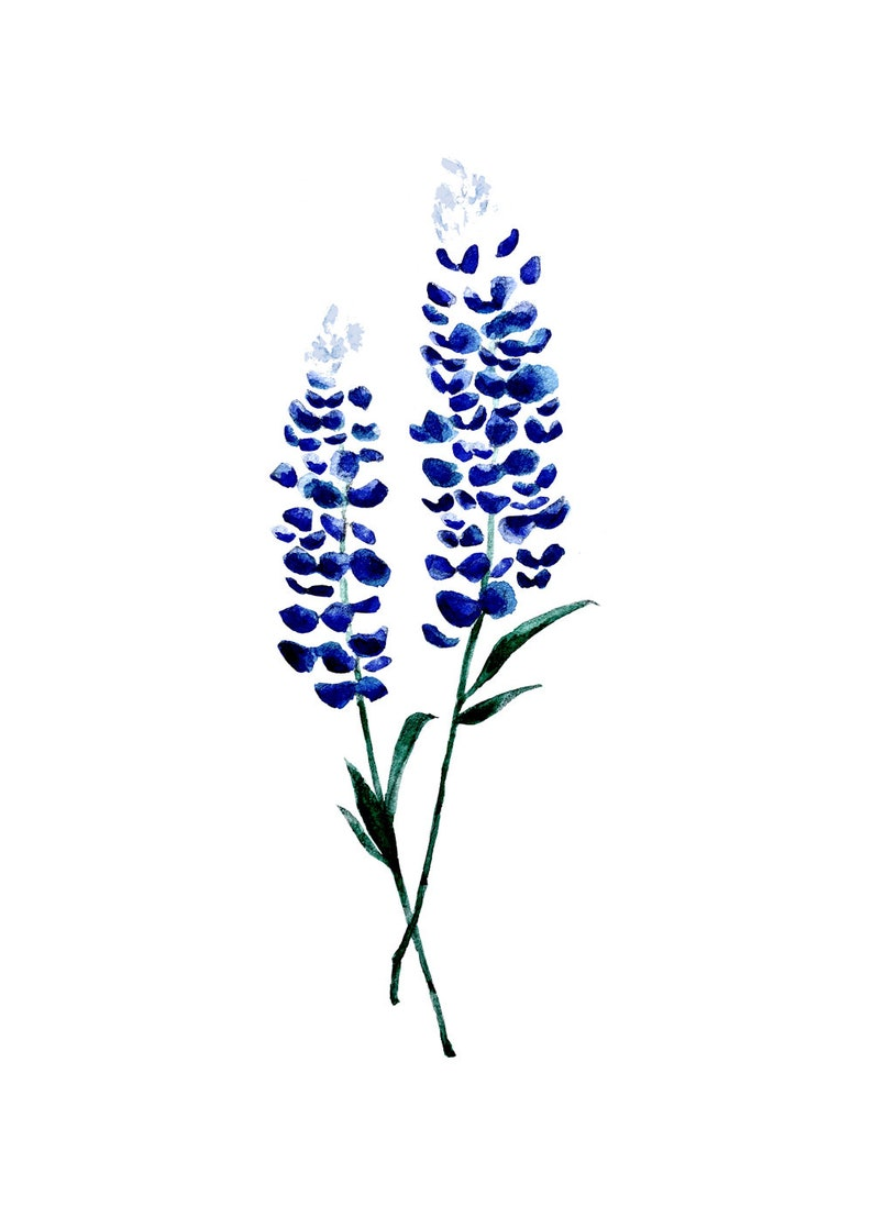 afb9ff680ba9b Bluebonnet Flower Tattoo Design by Pasadya Floral Watercolor   Etsy